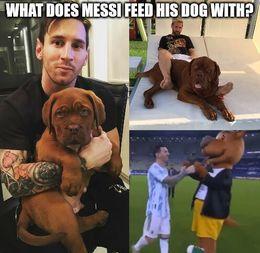 His dog memes
